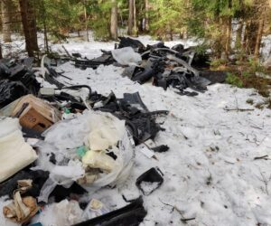 Miško paklotė tapo automobilių atliekų sąvartynu